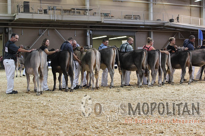 All-American Brown Swiss 2016