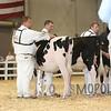 All-American16_Holstein_IMG_1407
