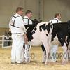All-American16_Holstein_IMG_1408