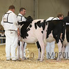 All-American16_Holstein_IMG_1410