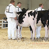 All-American16_Holstein_IMG_1409
