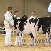 All-American16_Holstein_IMG_1414