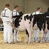 All-American16_Holstein_IMG_1411