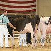 All-American16_Holstein_IMG_2005