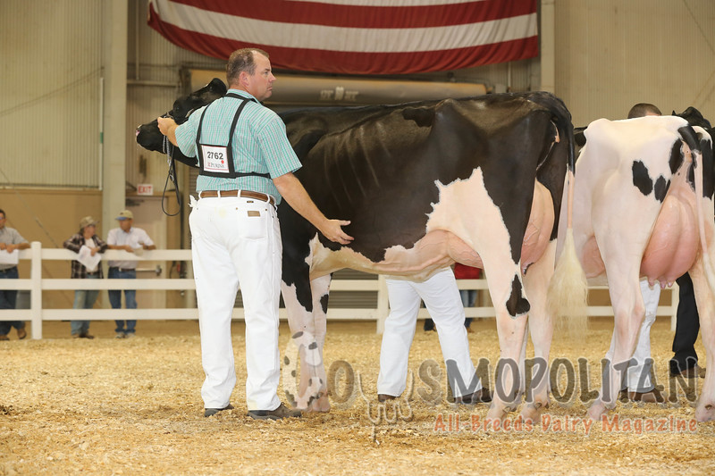 All-American16_Holstein_IMG_2007