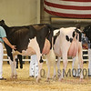 All-American16_Holstein_IMG_2002