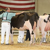 All-American16_Holstein_IMG_2006