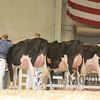 All-American16_Holstein_IMG_2093
