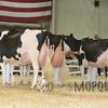 All-American16_Holstein_IMG_2563