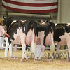 All-American16_Holstein_IMG_2478