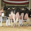 All-American16_Holstein_IMG_2471