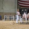 All-American16_Holstein_IMG_2476