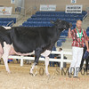 All-American16_Holstein_IMG_2679