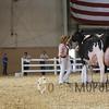 All-American16_Holstein_IMG_2473