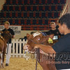 All-American16_JR_MilkingShorthorn_DSC_3235