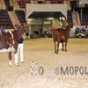 All-American16_JR_MilkingShorthorn_DSC_3238