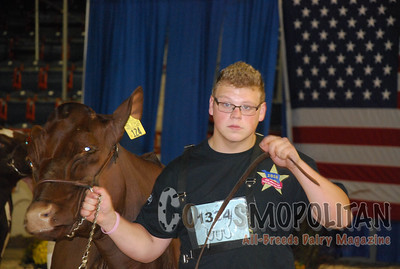 All-American JR Milking Shorthorn