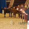 All-American16_JR_MilkingShorthorn_DSC_3237