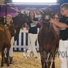 All-American16_JR_MilkingShorthorn_DSC_3236