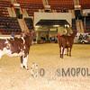 All-American16_JR_MilkingShorthorn_DSC_3239