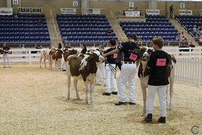 All-American JR Red Holstein