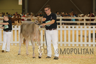 All-American Jr Brown Swiss 16