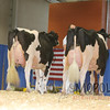 All-American16_PAHolstein_IMG_9905