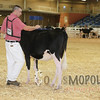 All-American16_PAHolstein_IMG_8749