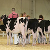 All-American16_PAHolstein_IMG_8754
