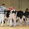 All-American16_PAHolstein_IMG_8753