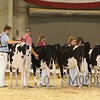 All-American16_PAHolstein_IMG_8750