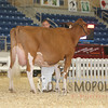 All-American16_RedHolstein_IMG_1317