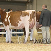 All-American16_RedHolstein_IMG_0786