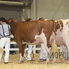 All-American16_RedHolstein_IMG_0787