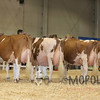 All-American16_RedHolstein_IMG_1292