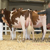 All-American16_RedHolstein_IMG_0785