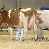 All-American16_RedHolstein_IMG_1179