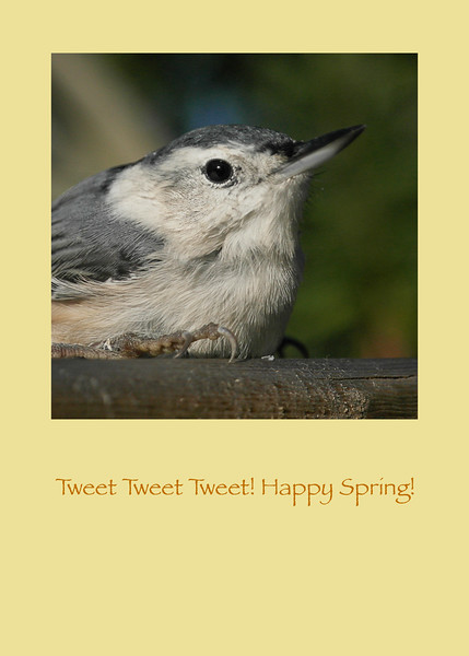 The Nuthatch