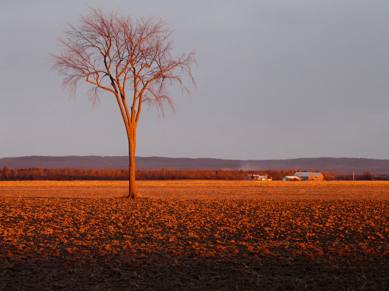 One of my favourite elm trees on the way to St. Eugene, Ontario.
