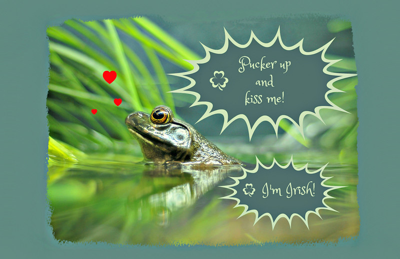 "<a href=""https://www.greetingcarduniverse.com/holiday-cards/st-patricks-day-cards/kiss-me-im-irish/st-patricks-day-green-1468598?aid=253730"">https://www.greetingcarduniverse.com/holiday-cards/st-patricks-day-cards/kiss-me-im-irish/st-patricks-day-green-1468598?aid=253730</a>"