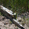 Left over from one of the many ship wrecks in this area. Maybe the Anna Maria?