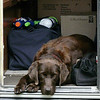 Moki wanting to go camping with us.  She is waiting in the back of the camper--just in case.