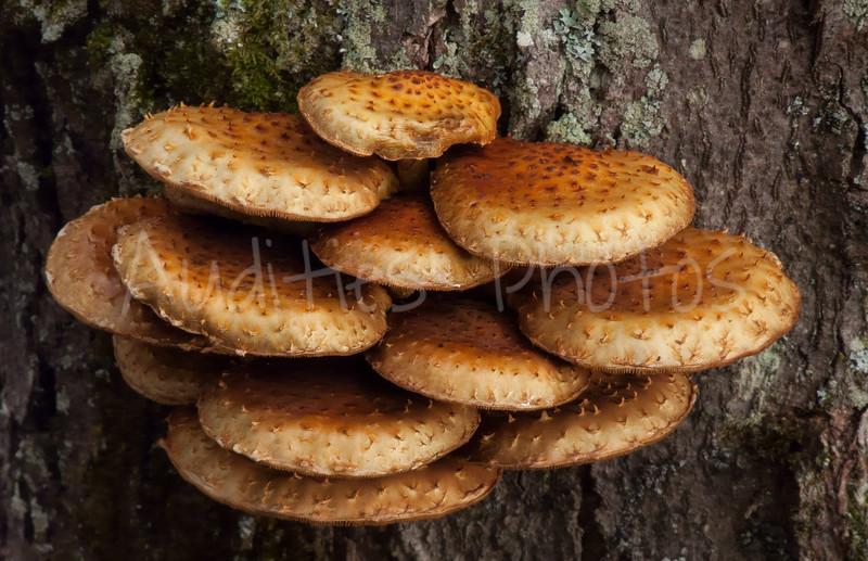 The fungi always catch my eye.