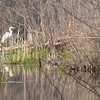 This egret was so calm and still...for awhile.