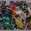 Focus on fallen fall foliage.