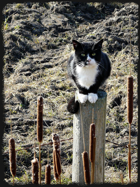 I'm the guard cat of this field.