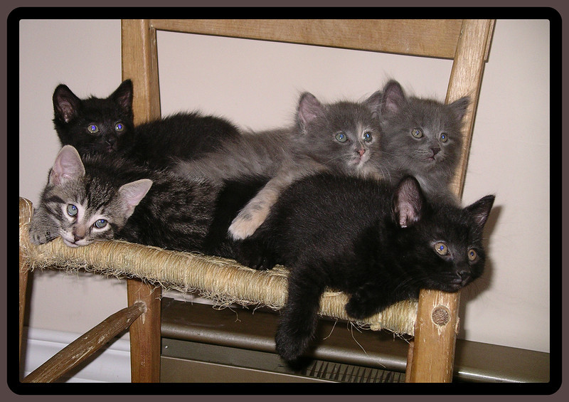 Five little kittens who lost their mittens.