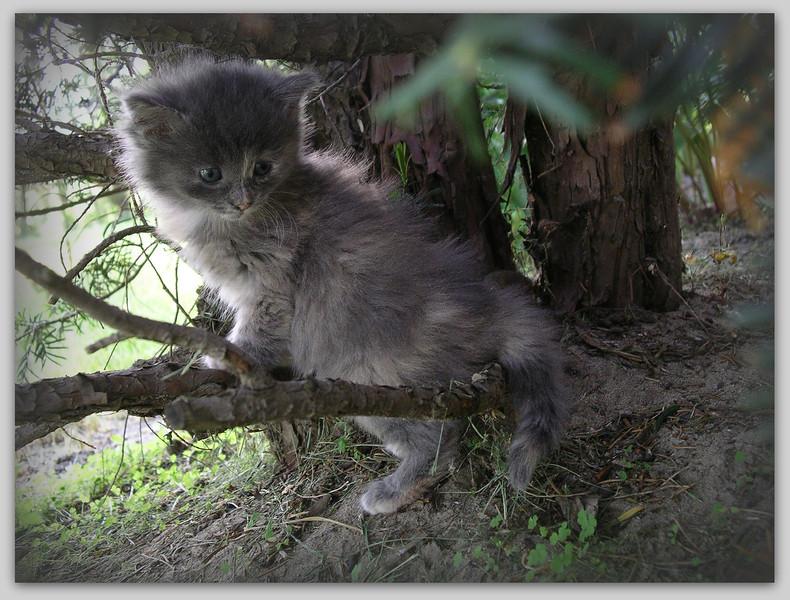 Ah ... she was an adorable, soft, precious little kitten.
