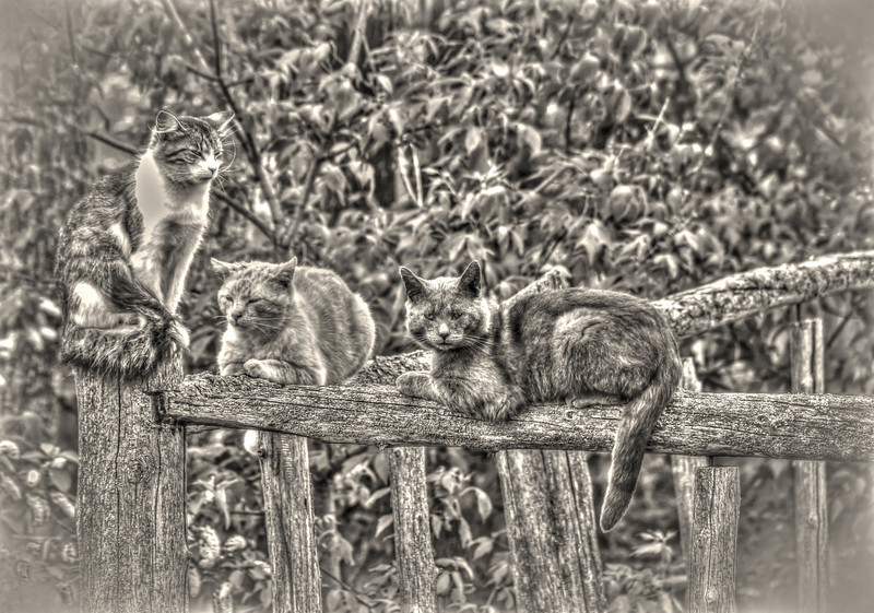 Grungy, feral cats chill.