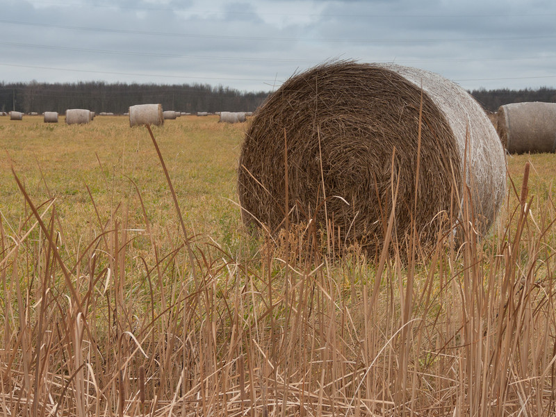 These are huge bales of hay.